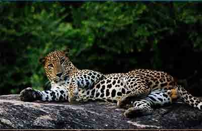 Yala National Park Sri Lanka Tours