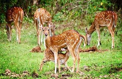 Yala National Park Sigiriya