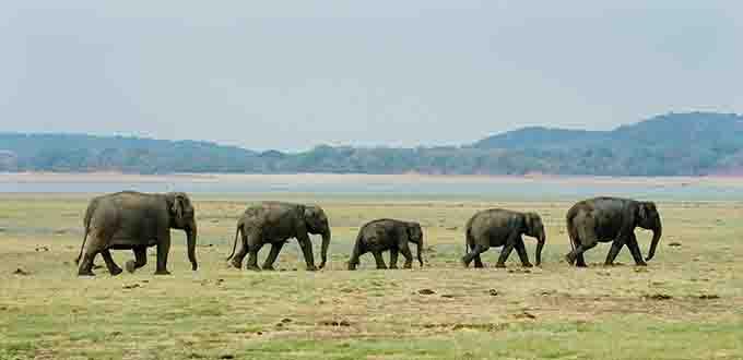 Sri Lanka Tours Minneriya